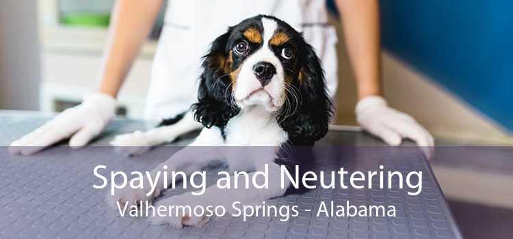 Spaying and Neutering Valhermoso Springs - Alabama