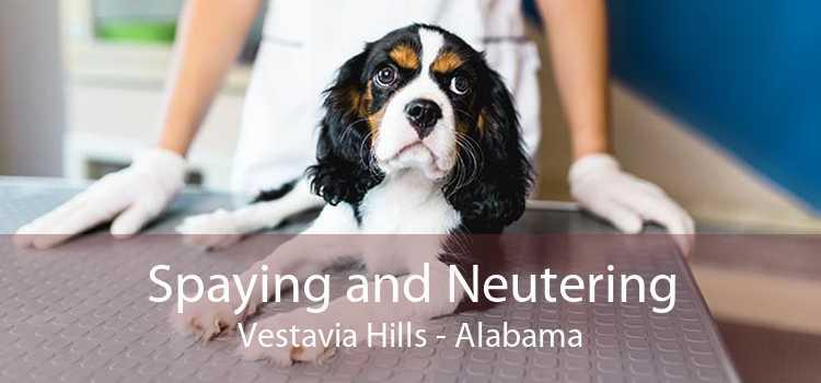 Spaying and Neutering Vestavia Hills - Alabama