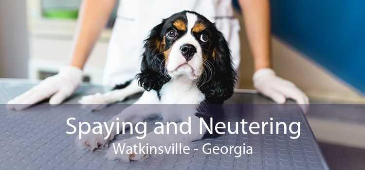 Spaying and Neutering Watkinsville - Georgia