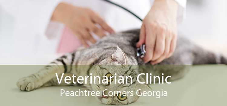 Veterinarian Clinic Peachtree Corners Georgia